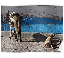 It Seems That This Donkey has Fleas - Parece Que Este Burro Tiene Pulgas Poster