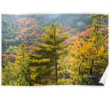 Rich colors of fall trees on a mountain slope Poster