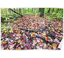 Forest ground is fully covered by multicoloured fall maple leaves Poster