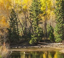 Reflections of autumn by Linda Sparks