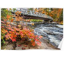 Close up view of a maple plant and distant bridge Poster