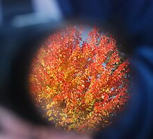 Autum through a Camera Lens by Payne24