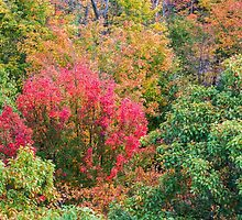 Close up view of red, green and yellow-colored fall trees by Sergey Orlov
