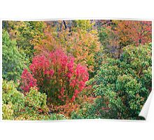 Close up view of red, green and yellow-colored fall trees Poster