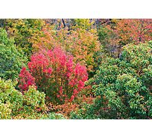 Close up view of red, green and yellow-colored fall trees Photographic Print