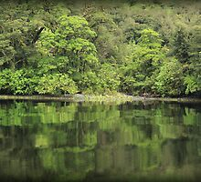 Doubtful Sound, NZ by suzannenz
