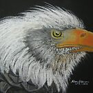 Steve's Bald Eagle by Hilary Robinson