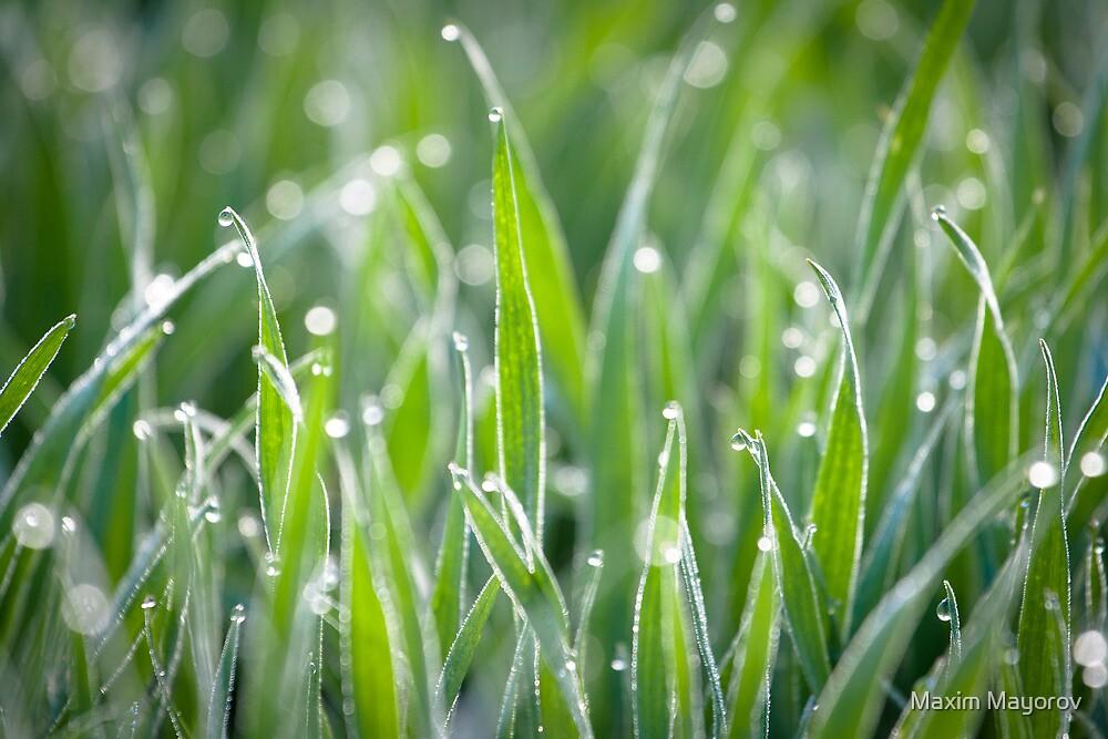 Wet grass by Maxim Mayorov
