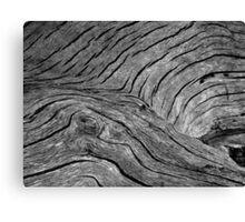 Dead Tree Croc Canvas Print