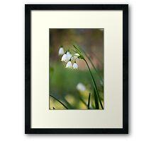 Lily of the walley Framed Print