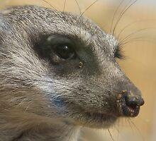 hello meerkat so very nice to meet you by meareneko