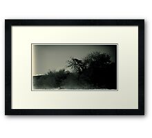 Desert Brush Framed Print