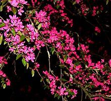 Dark Blooming by meareneko