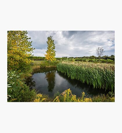 An idyllic pond, surrounded by autumn trees and green grass Photographic Print
