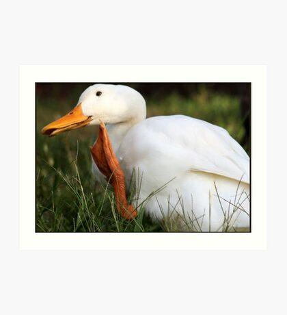 The Waving Duck Art Print
