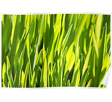 Rich spring green grass, suitable as a background image Poster