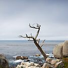 The other lone cypress at Pebble Beach by Peter Dickinson