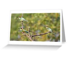 European bee-eaters Greeting Card