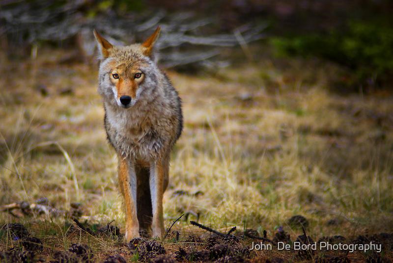 The Look Of A Predator by John  De Bord Photography