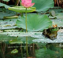 The Frog Prince by lindabeth