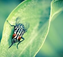 The fly by Nazm  Photography