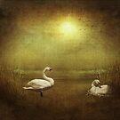 Nesting On Golden Pond by jules572