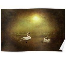 Nesting On Golden Pond Poster