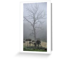 Prehistoric Scenery - Mt Wilson NSW Australia Greeting Card
