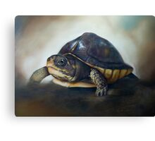'One of the patients...' Turtle Rescue Team, North Carolina State University College of Veterinary Medicine Canvas Print