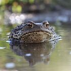 Cranky toad by cuprum
