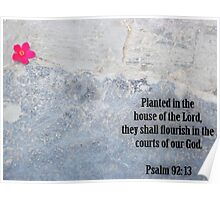Planted in Christ Poster