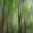 Woodland abstract by Photos - Pauline Wherrell