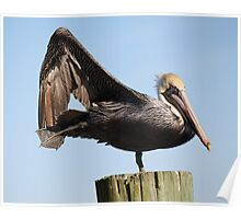 Pelican Posing Poster