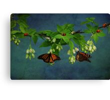 Going Buggy Canvas Print