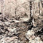 Charleston Falls creek by Page Chambers