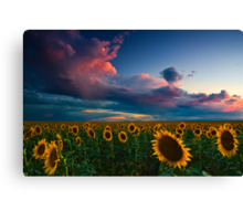 Skies Of A Summer Sunset Canvas Print