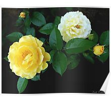 Rosa Julia Child Poster