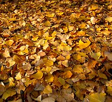 Autumn leaves by Honeyboy Martin