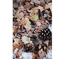 Autumn vs Winter Photographic Print