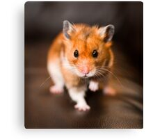 A hamster called Ratty Canvas Print