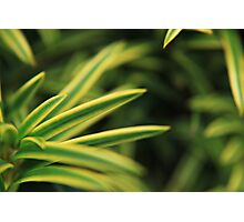 Shrubbery Photographic Print