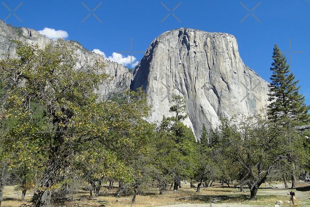 Yosemite - El Capitan by Barrie Woodward