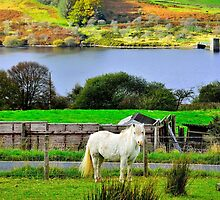 Welsh Pony by NaturesEarth
