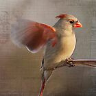 Cardinal with French Text by KatWarren