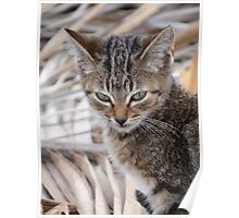 Little Cat On The Roof - Gatito En El Techo Poster