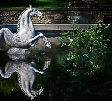 Sea Horse and Reflection by cclaude