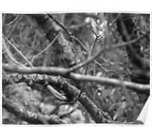 Blured Branches  Poster