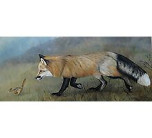Red Fox Encounter Photographic Print