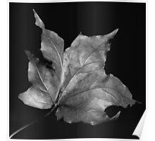 Silver Leaf Poster