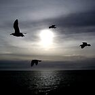 Ocean Shadows by Vanessa Serroul